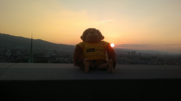 Spanky enjoying the sunset over the city - Zurich Switzerland
